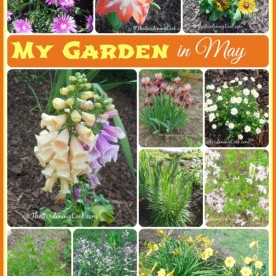 This is just a hint of my garden in North Carolina in May. See more great photos and lots of details at thegardeningcook.com