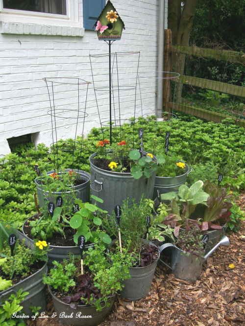 Use galvanized tubs as planters for perennials, vegetables and herbs from ourfairfieldhomeandgarden.com