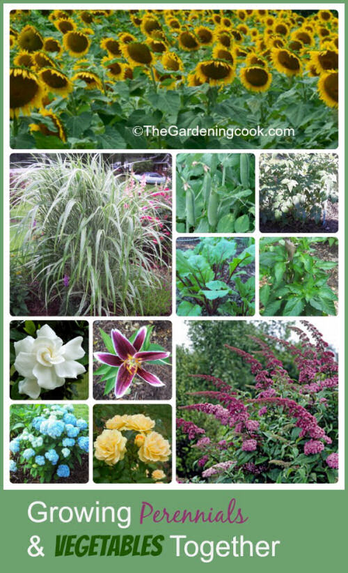 Growing vegetables and perennials together combines the best of both worlds!