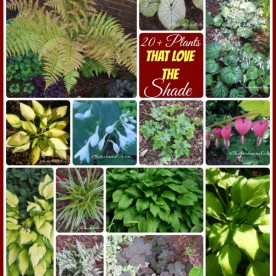 A collection of more than 20 plants that love the shade - see them all at thegardeningcook.com