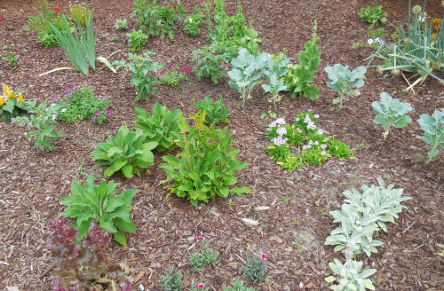 Vegetables and perennials grow in harmony in this bed.