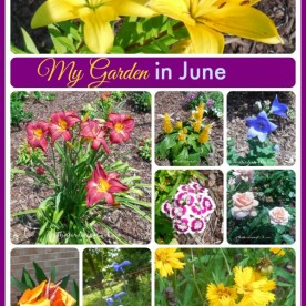 My Garden in June is a fabulous display of perennials, annuals, bulbs and vegetables. See all the photos at thegardeningcook.com/garden-june