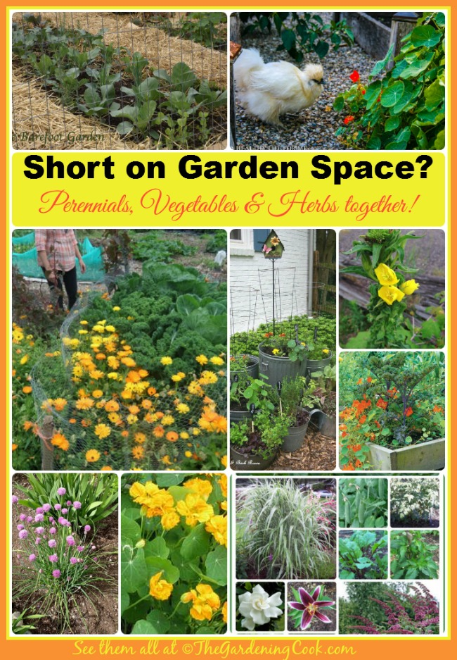 If You Are Short On Garden Space, Try Combination Gardening. Annuals,  Perennials,