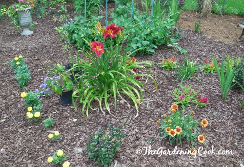 Daylily of the a year is a focal point of this bed.