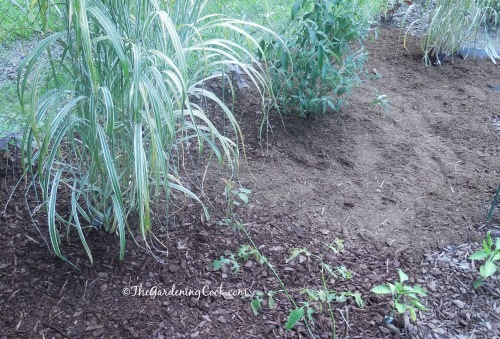 A layer of pine mulch and then bark mulch finishes the job.