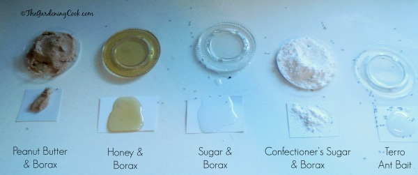Testing Five different ant killers - the results
