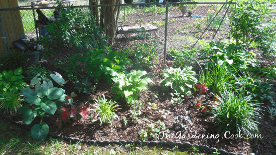 Shady garden bed
