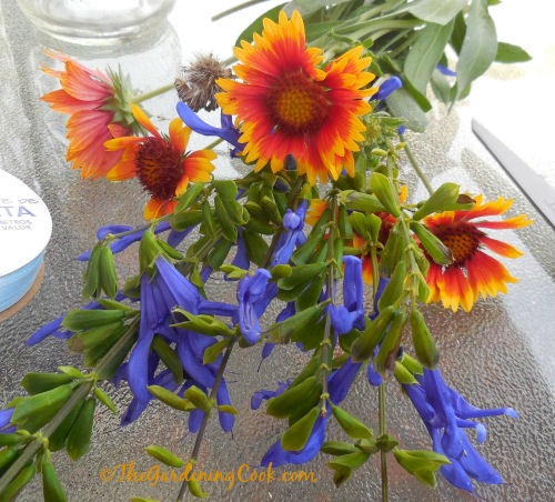 Gaillardia and salvia make the perfect color combination