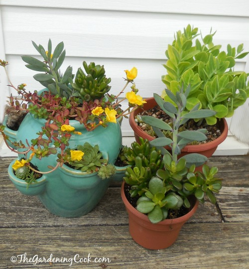 Small grouping of succulents fits this area of my deck perfectly.