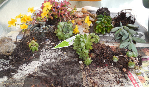 Plants for the succulent strawberry planter