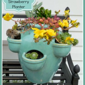 This strawberry planter is planted with succulents for a charming effect. See the DIY project at thegardeningcook.com/succulent-strawberry-planter