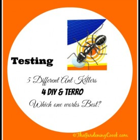 Testing 4 Homemade ant killers against Terro. Which one works best? Find out at https://thegardeningcook.com/testing-borax-ant-killer-remedies/