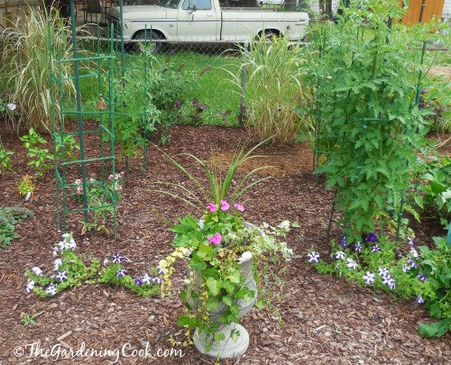 Urn planter at the center of caged tomato plants