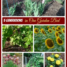 A tribute to my family - 5 generations in one garden bed - thegardeningcook.com/