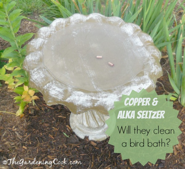 Testing Alka Seltzer and Copper to clean a bird bath. Do they work? find out at thegardeningcook.com/alka-seltzer-copper-birdbath