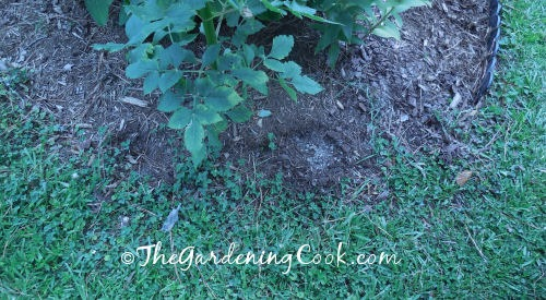 Edging with weeds growing in