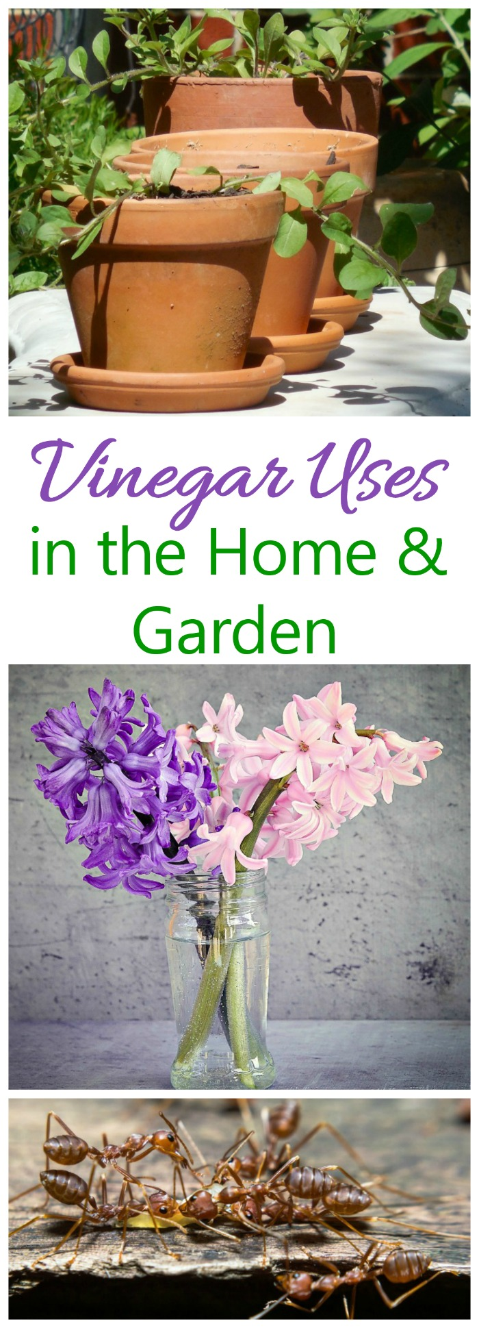 Vinegar can be used in many ways in the home and garden