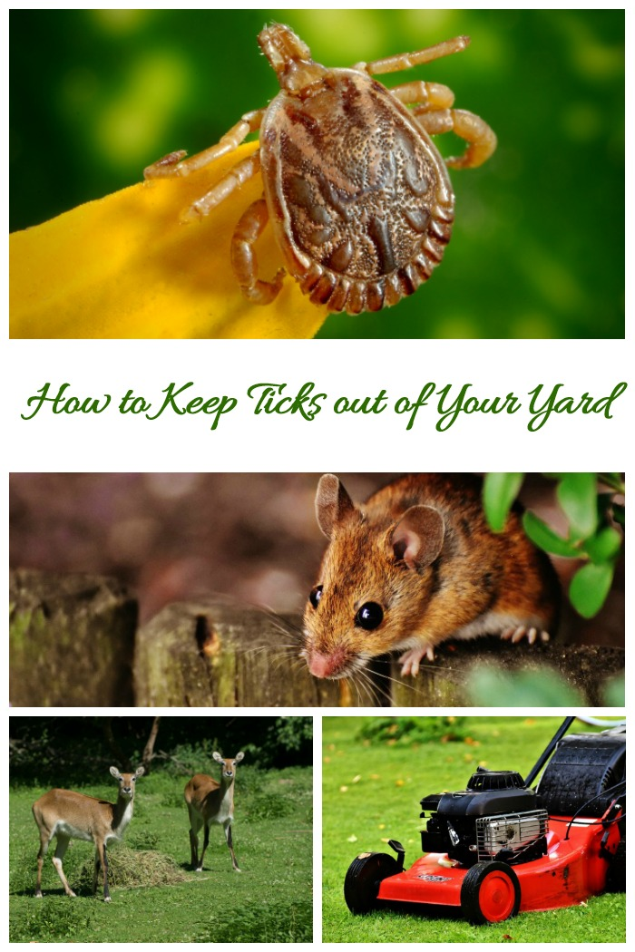Follow these tips to get rid of ticks in the yard and garden