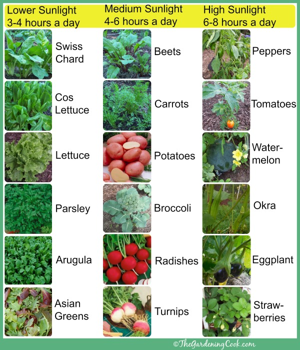 Shade tolerant vegetables vs sun friendly veggies the gardening cook for How much sun does a garden need