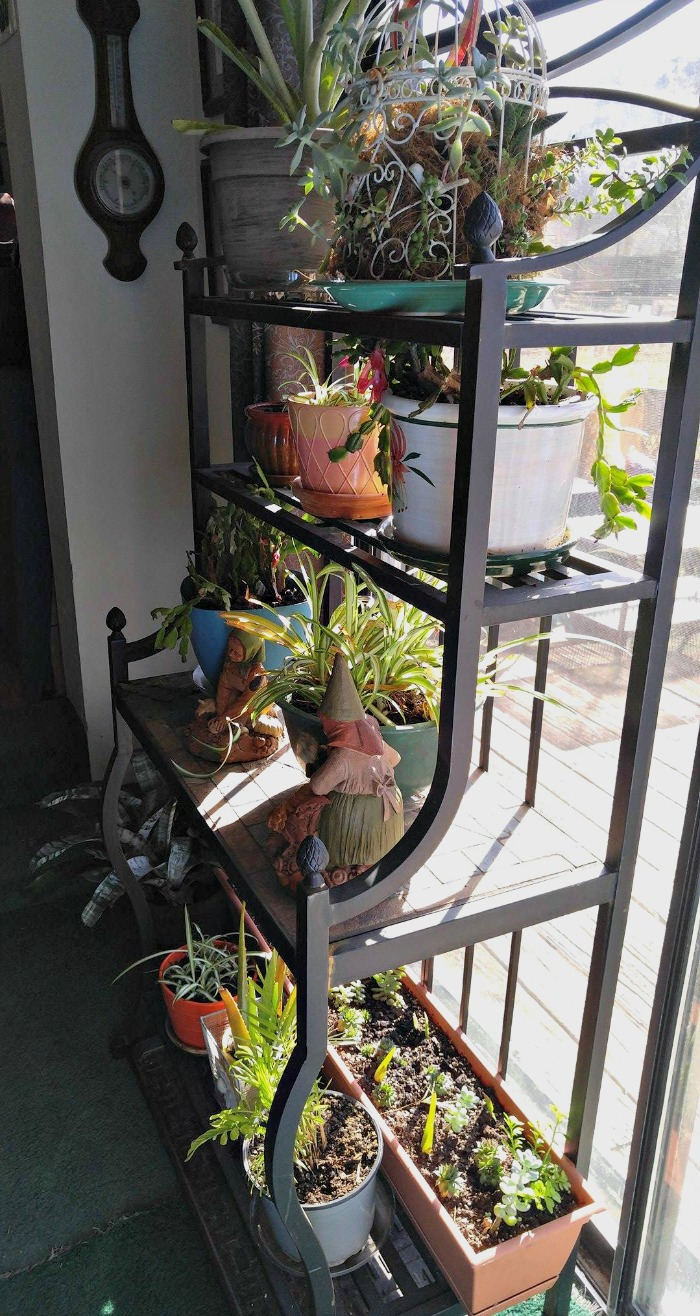 This metal plant stand is on my patio during the summer and holds my plants indoors during the winter months.