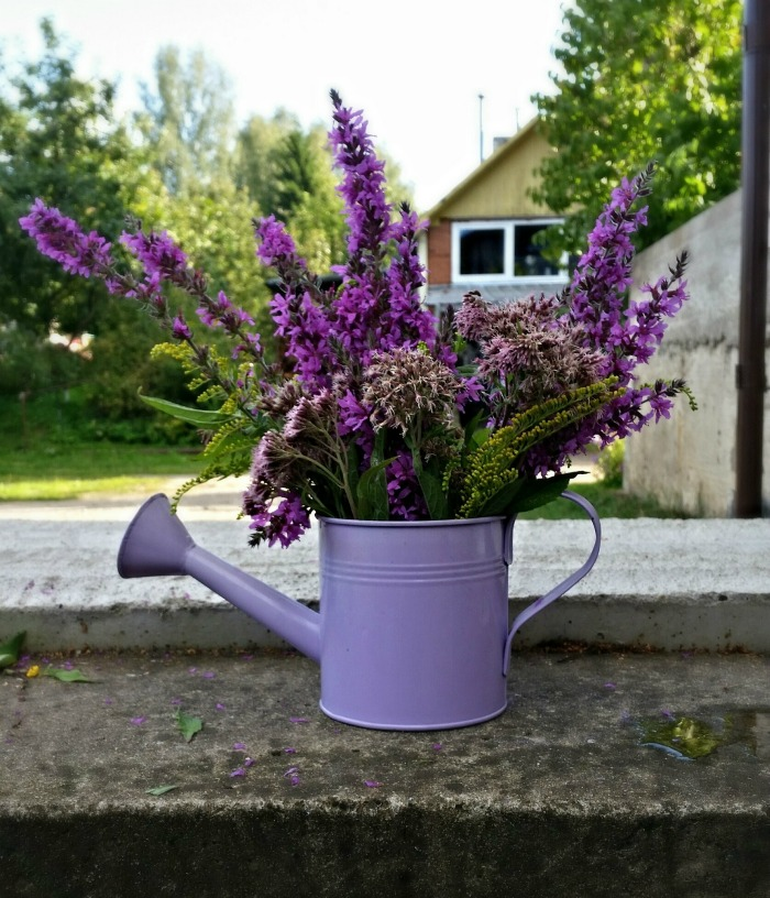 Purple watering can planter