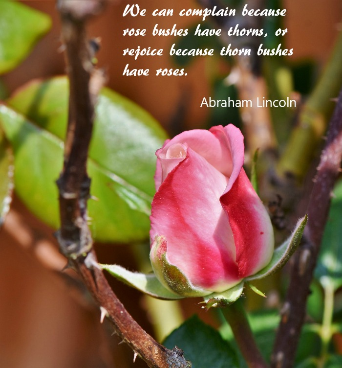 We can complain because rose bushes have thorns, or rejoice because thorn bushes have roses. (Abraham Lincoln)