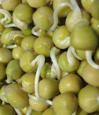Help seeds to germinate