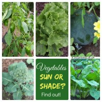Do your vegetables need sun or shade?