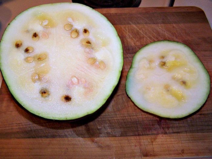 Unripe watermelon