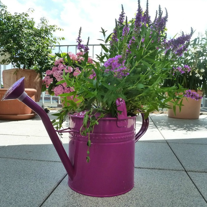 Bright purple watering can filled with flowers