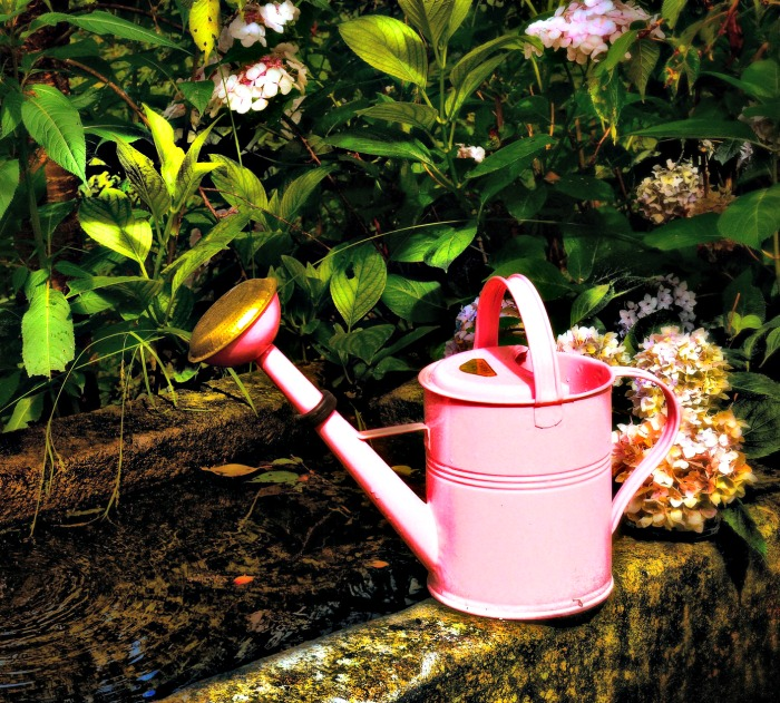 Pink watering can on a wall