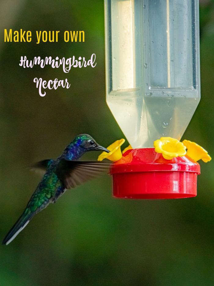 DIY Hummingbird Nectar
