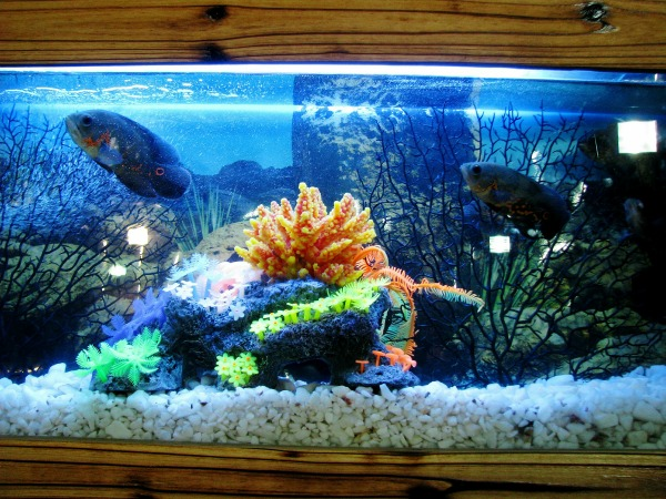 Aquarium water makes a great fish emulsion plant fertilizer.