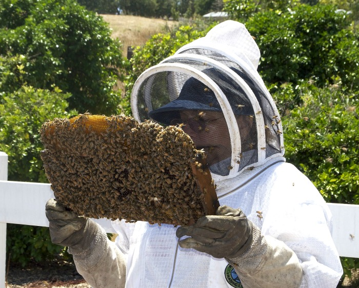 Back yard beekeepers help with the decline of the bee population