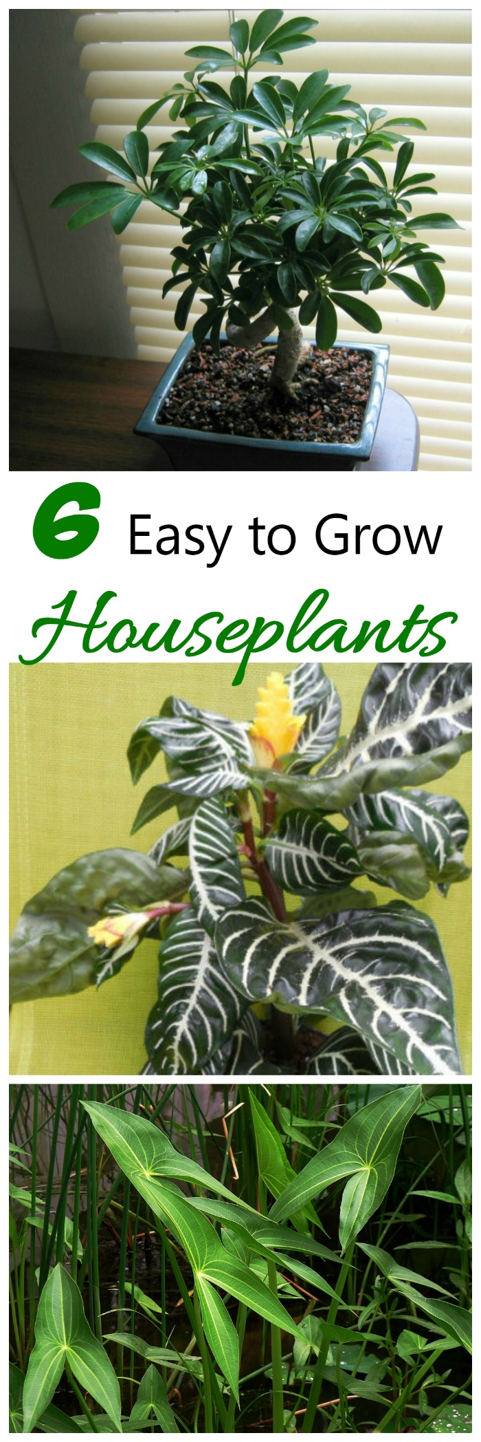 These six easy to grow houseplants are perfect for those who don't have a green thumb.