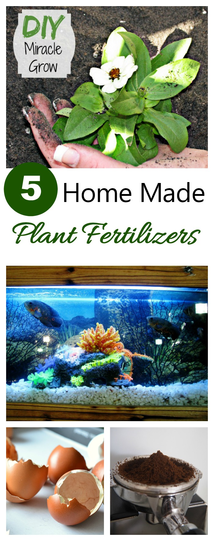 Make Your Own House Plant Fertilizer Home Design 2017