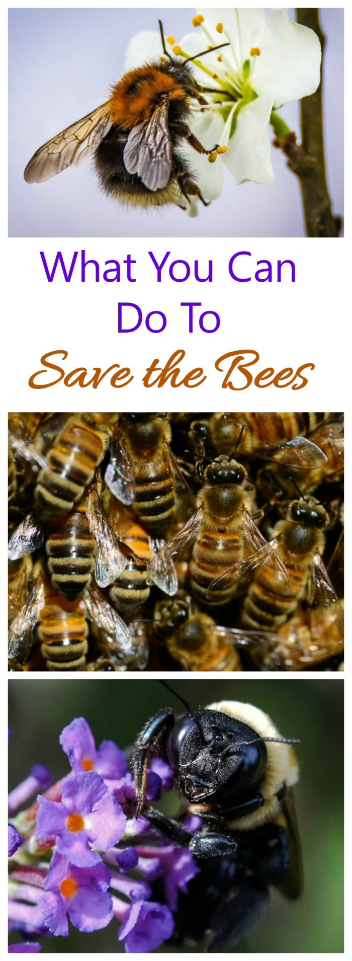 The declining bee population affects our food supply. See what you can do to help attract bees.