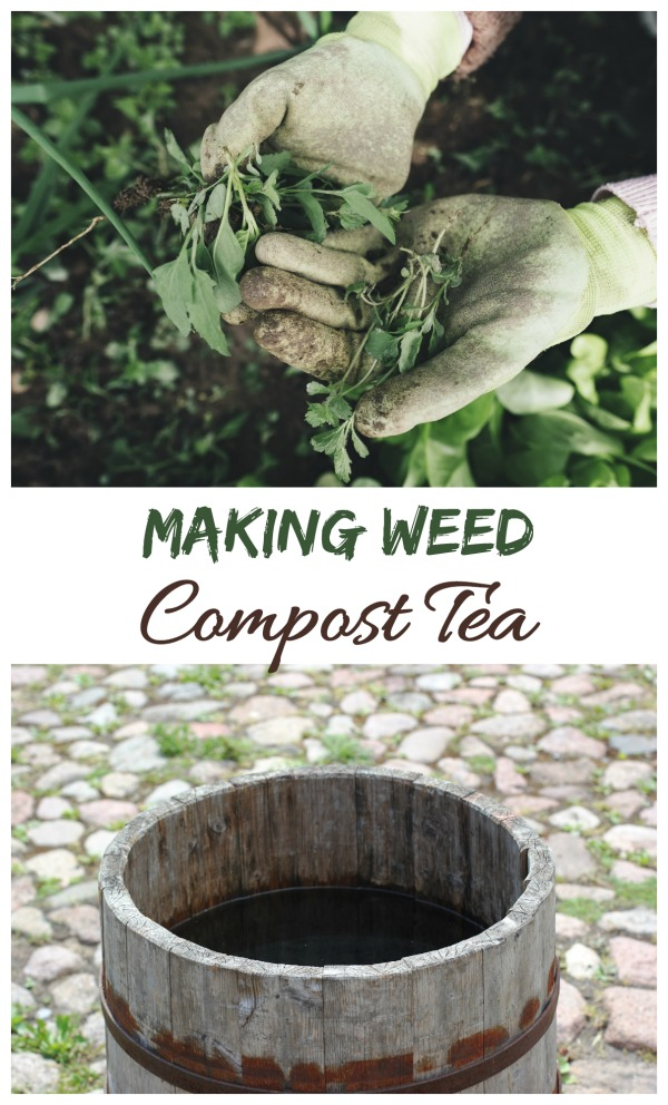 Making compost tea with weeds and rain water