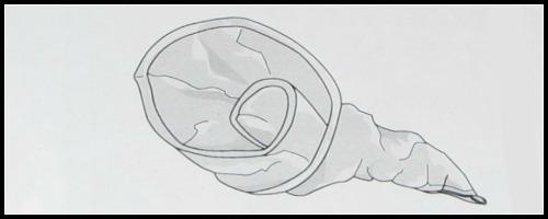 aluminum pan cornucopia