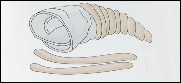 Form bread on the cornucopia