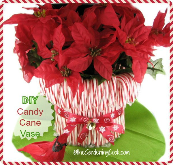 Diy candy cane vase holiday decor the gardening cook