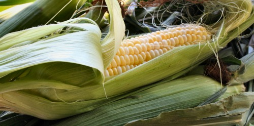 corn on the cob freezes well for several months.