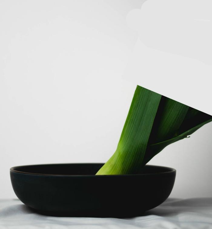 Growing leeks in a bowl of water