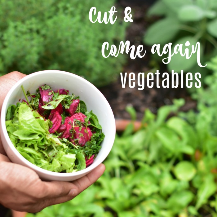 Cut and come again vegetables
