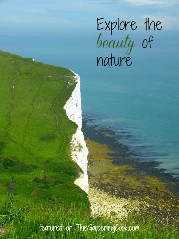 Nature at it's best:  White cliffs of Dover, England