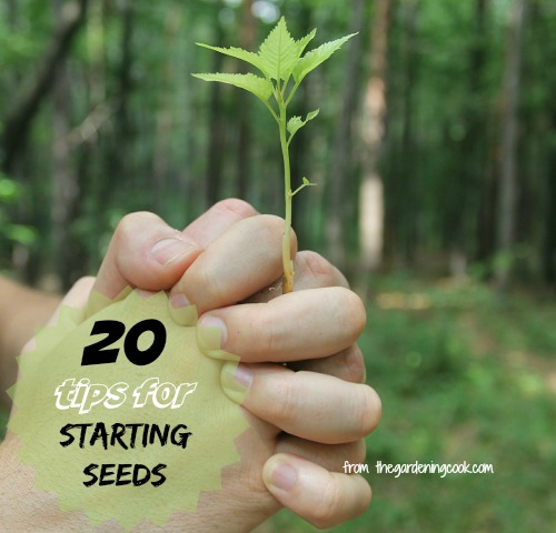 20 tips for starting seeds