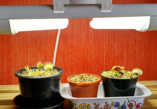 Seed starting tips: Use Grow lights for starting seeds.