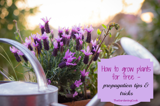 Plant propagation tips - thegardeningcook.com/plant-propagation-tips