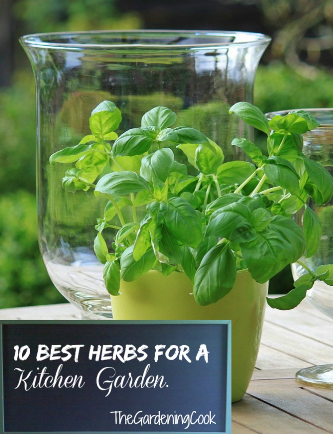 10 Best Herbs for Kitchen Gardens - thegardeningcook.com/10-best-herbs-for-kitchen-gardens