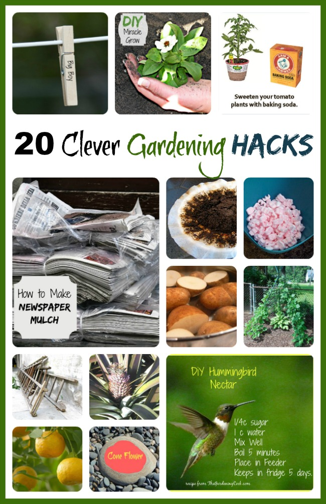 20 Clever Gardening Hacks to make this the best year yet.